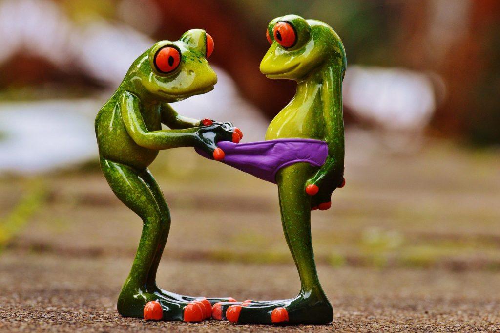 Une grenouille regardant dans les sous-vêtements d'une autre grenouille.